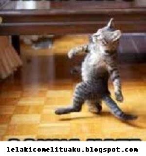 kucing berjalan walking cat