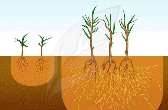 Mikroorganisme Tanah sebagai Pupuk Hayati