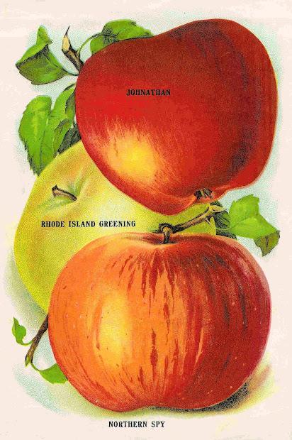 antique vintage fruit clip
