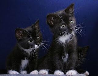 kucing comel3 Gelagat Si Comel