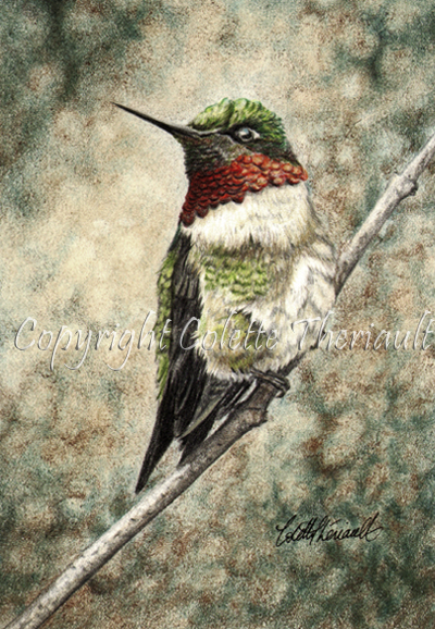 Ruby Throated Hummingbird drawing by Colette Theriault