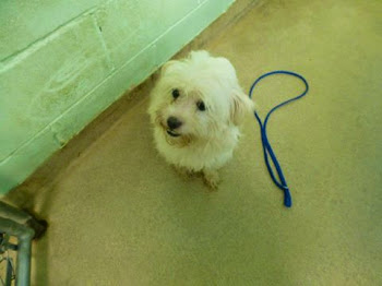 This is Ozzie...Now at the County Pound...A Little Nervous But Needs a Home