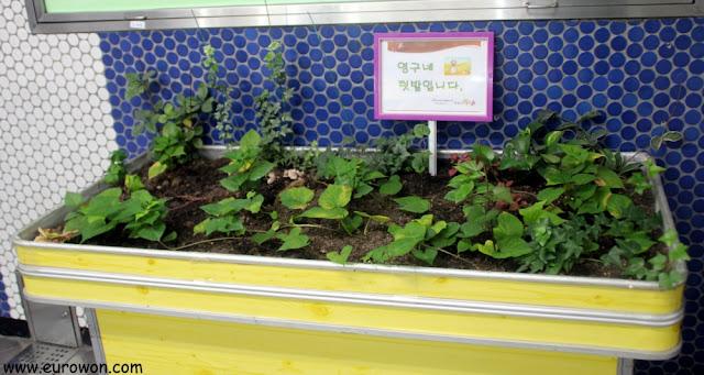 Plantas en la estación de Yeongdungpo del metro de Seúl