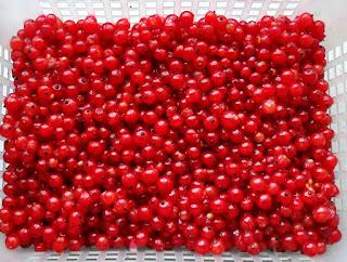17.07.  Красную смородину готовлю к переработке. С моего единственного кустика урожай около 7 л.