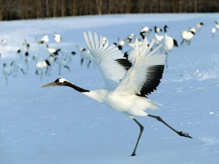 Amazing Bird Scene In Iceland