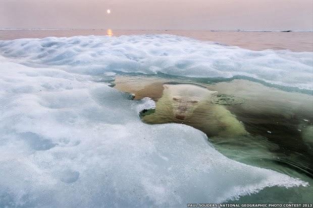 National Geografic divulga as melhores fotos de 2013