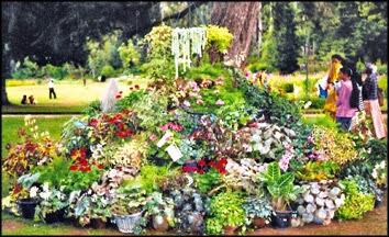 Nuwara Eliya Flowers Hakgala Gardens