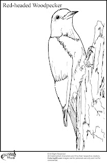 red headed woodpecker coloring pages