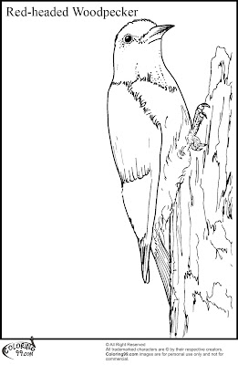 Red Headed Woodpecker Coloring Page