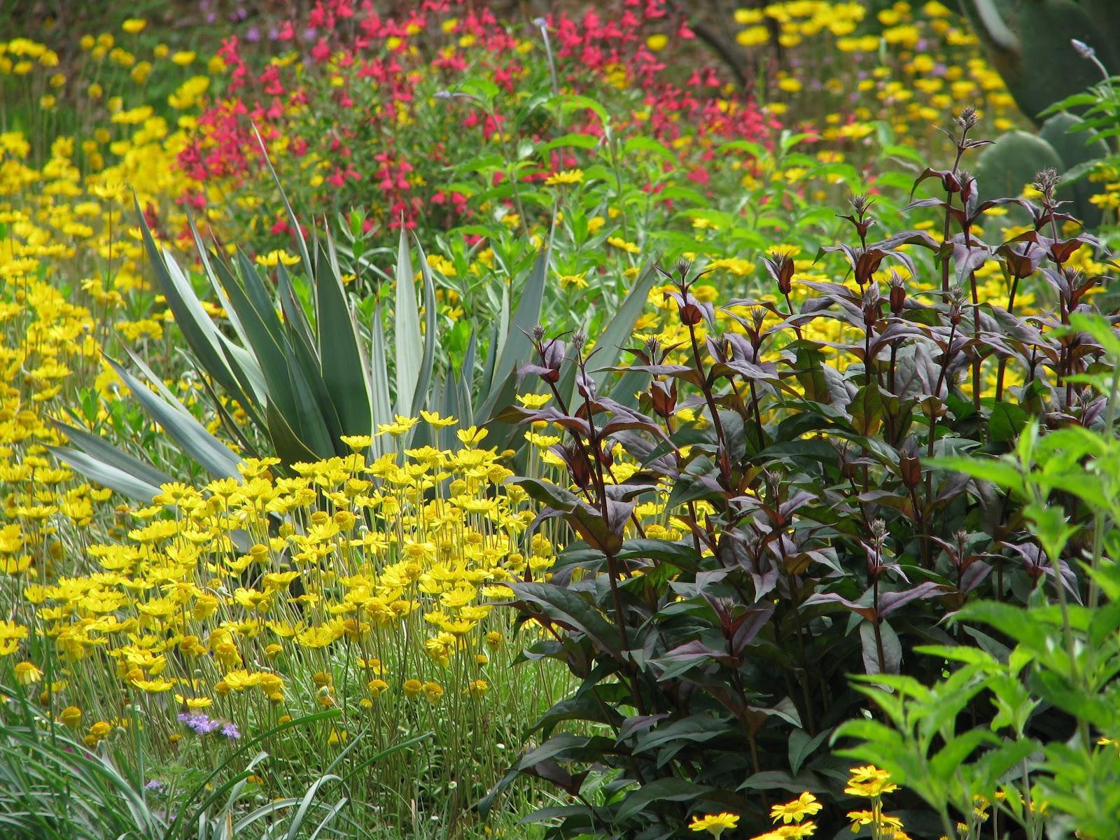 Lawn Maintenance Plano >> Plano Prairie Garden: The End of My Foolish Prairie Garden