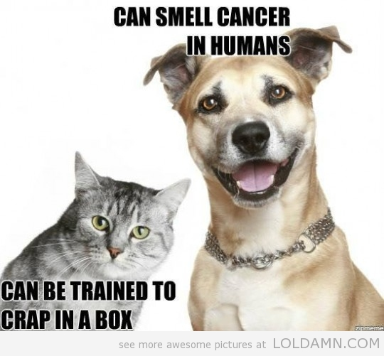 Cats Are Shit Compared To Dogs
