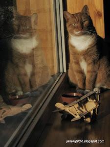 Cat Siim