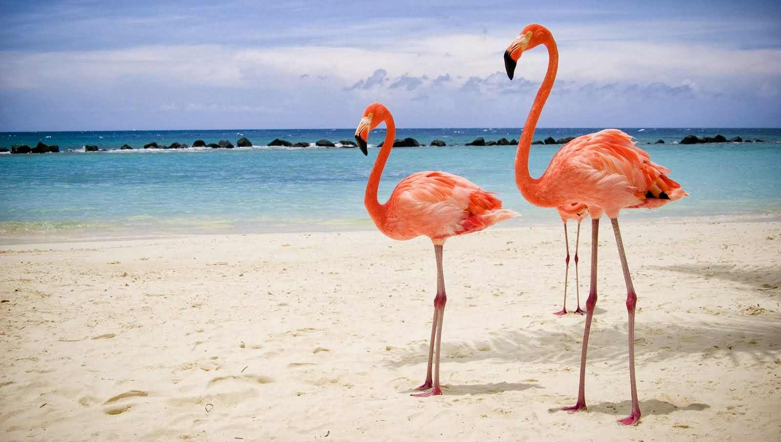Vacation Inspiration # 127 - Aruba