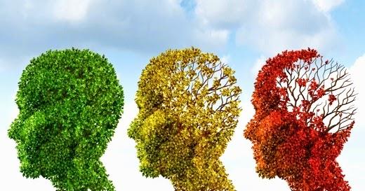 envejecimiento cerebro