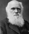 Frasi e Aforismi di Charles Darwin