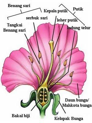 Superestu laporan praktikum botani dan sistematika tanaman superestu laporan praktikum botani dan sistematika tanaman morfologi bunga ccuart Image collections