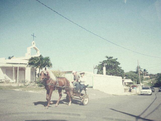 camuy horseback