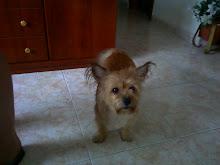 Mi perrito