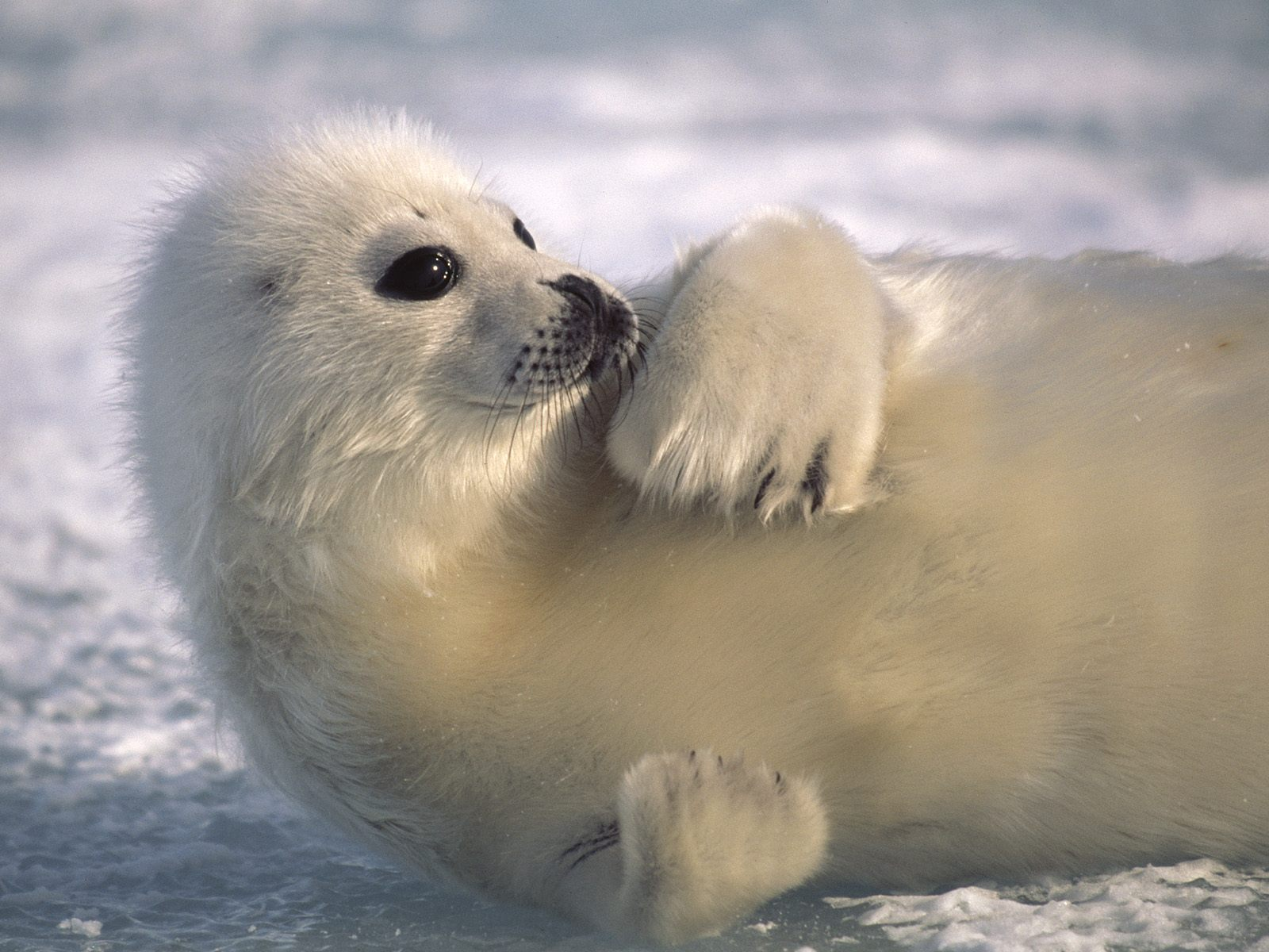 arctic ocean animals see n explore world