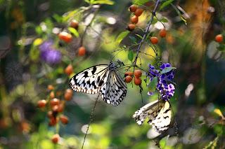 Mariposa y Flores en primavera