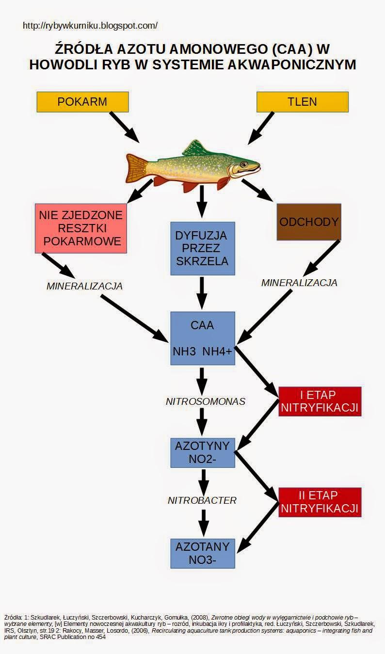 Schemat przedstawiający źródła azotu amonowego (CAA) w hodowli ryb w systemach zamkniętych