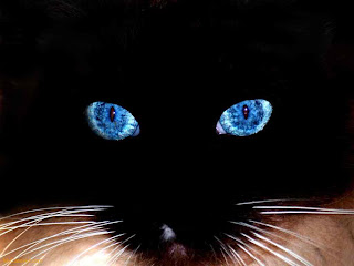 animal black cat face wallpaper