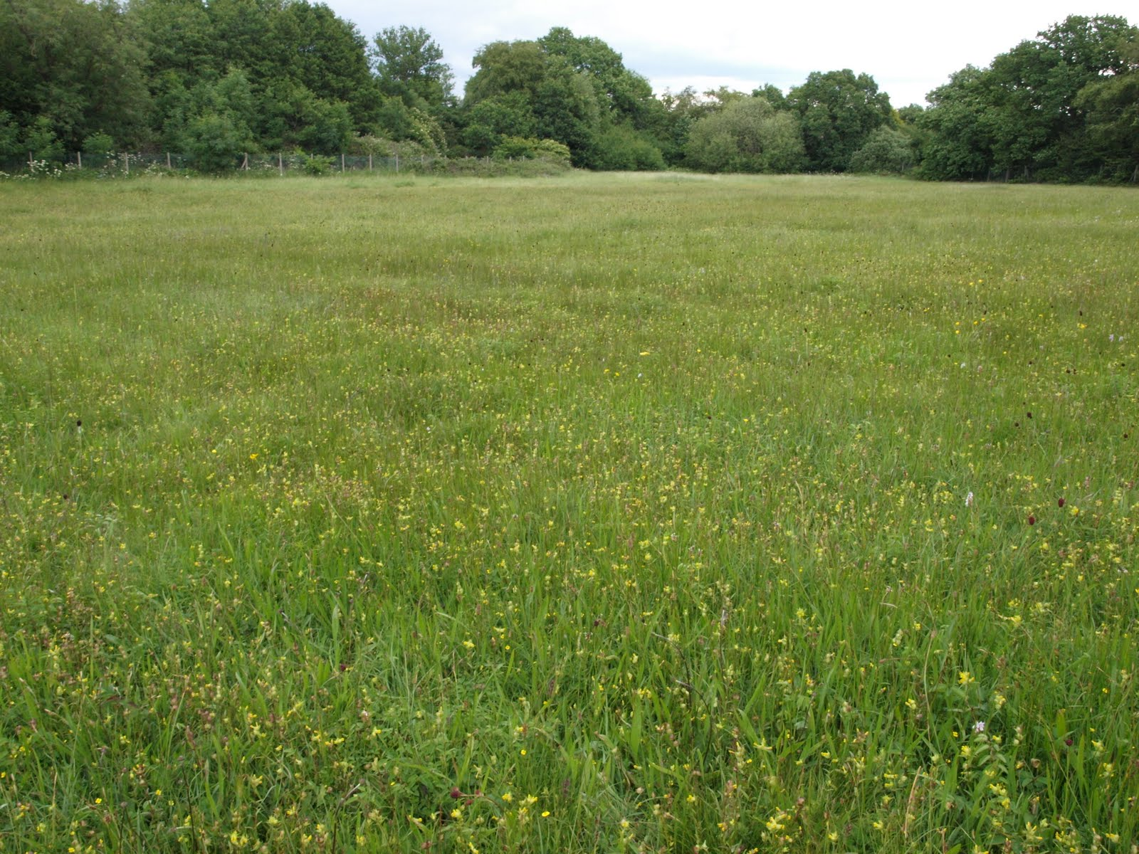 Ragged robin 39 s nature notes an ancient hay meadow for The meado