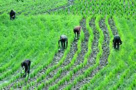 Corporate Farmers