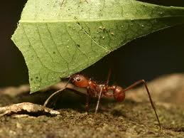 Ants picture