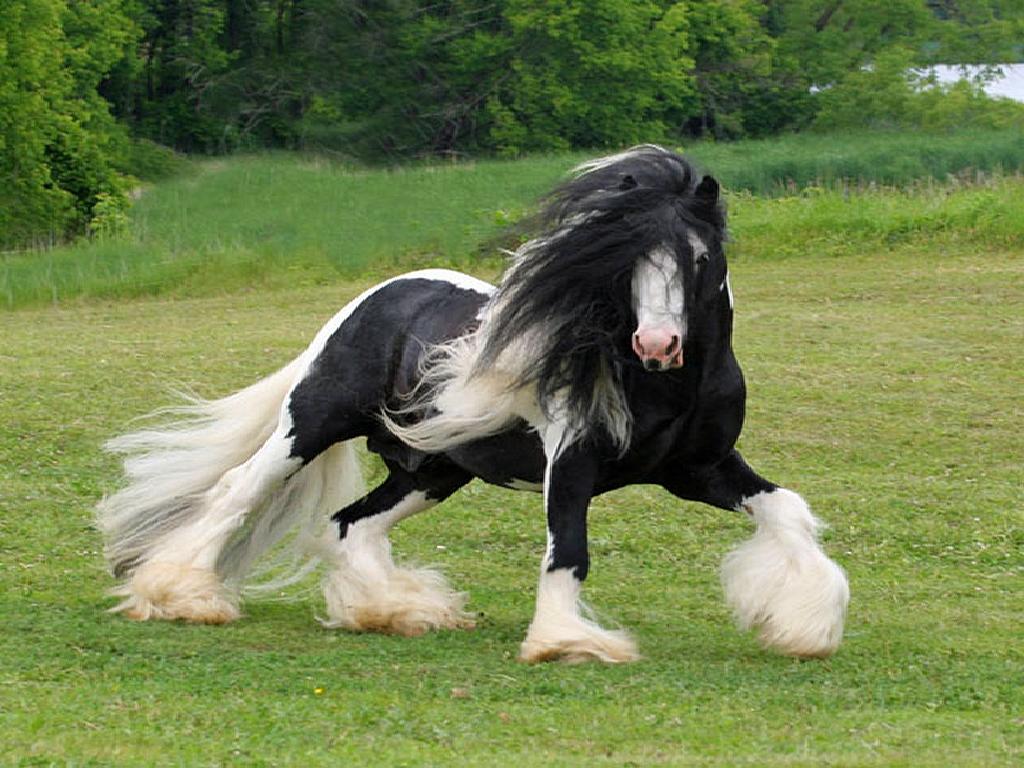 Black Horse Dancing Wallpaper