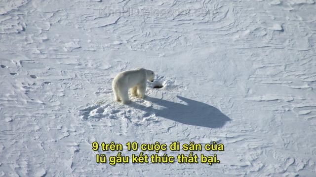 Frozen Planet (2011) - Hành Tinh Băng Giá