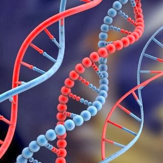 Soy Reencarnacionista La Memoria Genetica