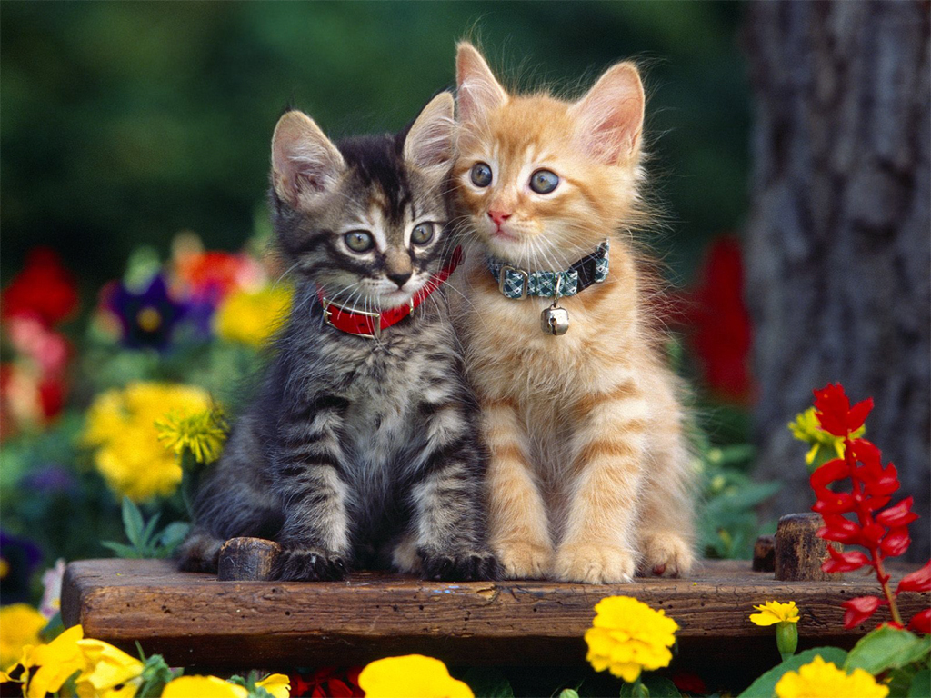 Cat kittens wallpaper 5 love and quotes kitten wallpaper 1024x768 cats 12251034 1024 768 thecheapjerseys Choice Image