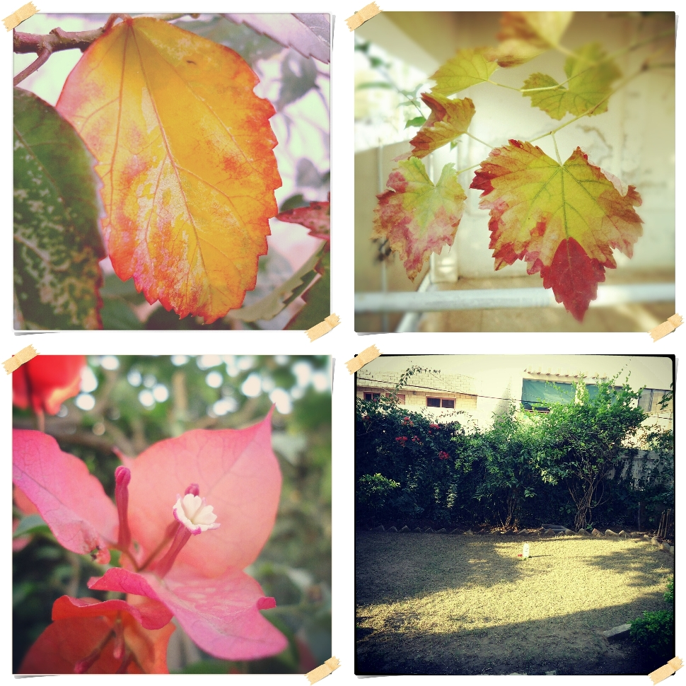 Instagram, Colors of Fall