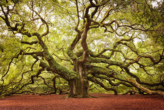 Image result for unusual tree