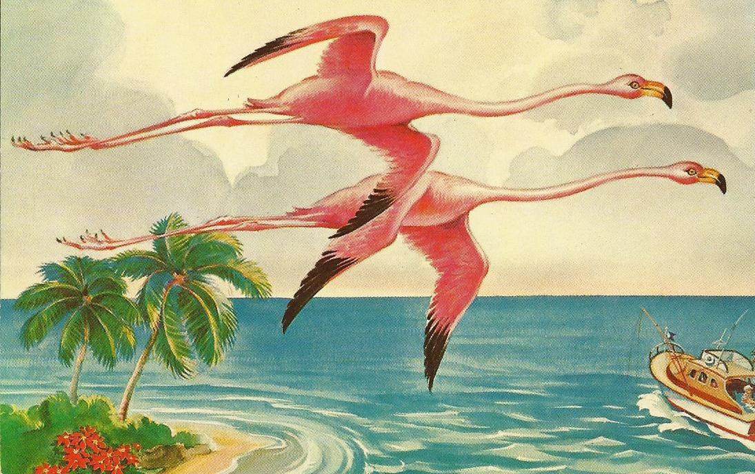 Vintage Travel Postcards Florida Flamingos