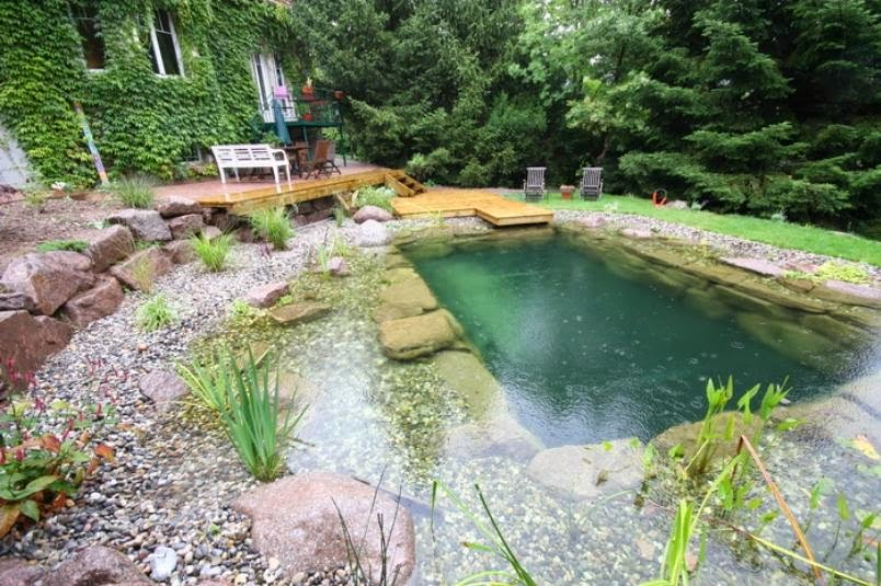 Matin lumineux piscines naturelles for Principe filtration piscine