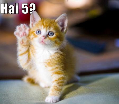 Hai 5 funny kitty
