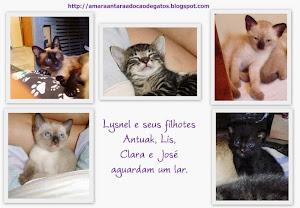 Amara Antara Adoção de gatos