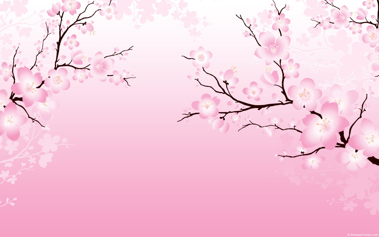 Natural cherry blossom pictures free download cherry Cherry blossom pictures