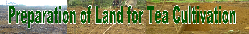 Land Preparation for Tea, Land Selection for tea, Rehabilitation of tea lands with grass
