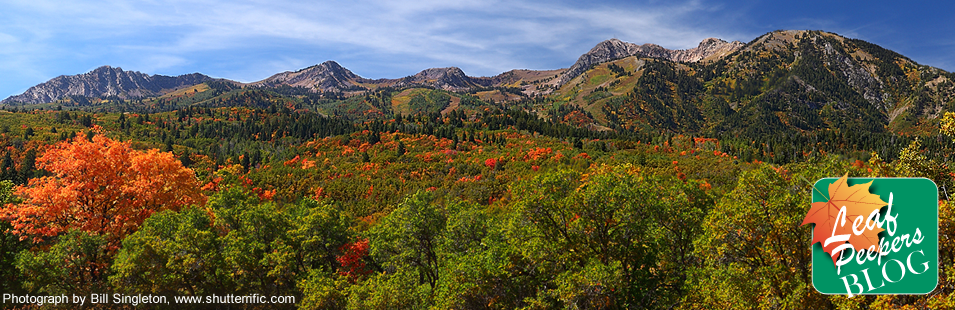 Utah Fall Color Watch