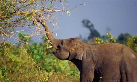 Bamboo Elephant2