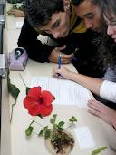 Entendo melhor a complexidade das plantas...