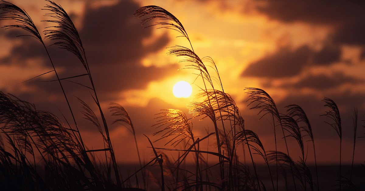 sunset through paddy fields hd wallpaper