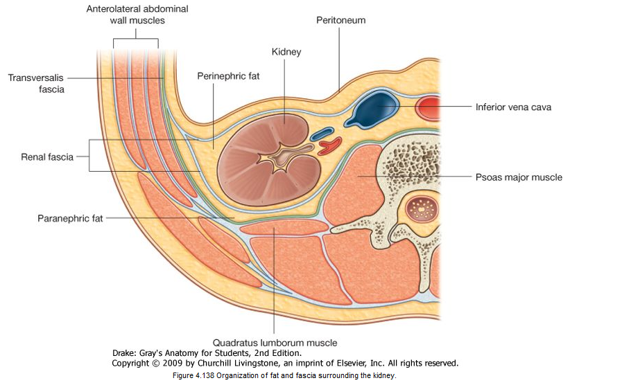 HYMedic Notes: The Adrenal Glands - Anatomy