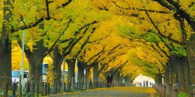 Terowongan ginkgo Kuil Meiji