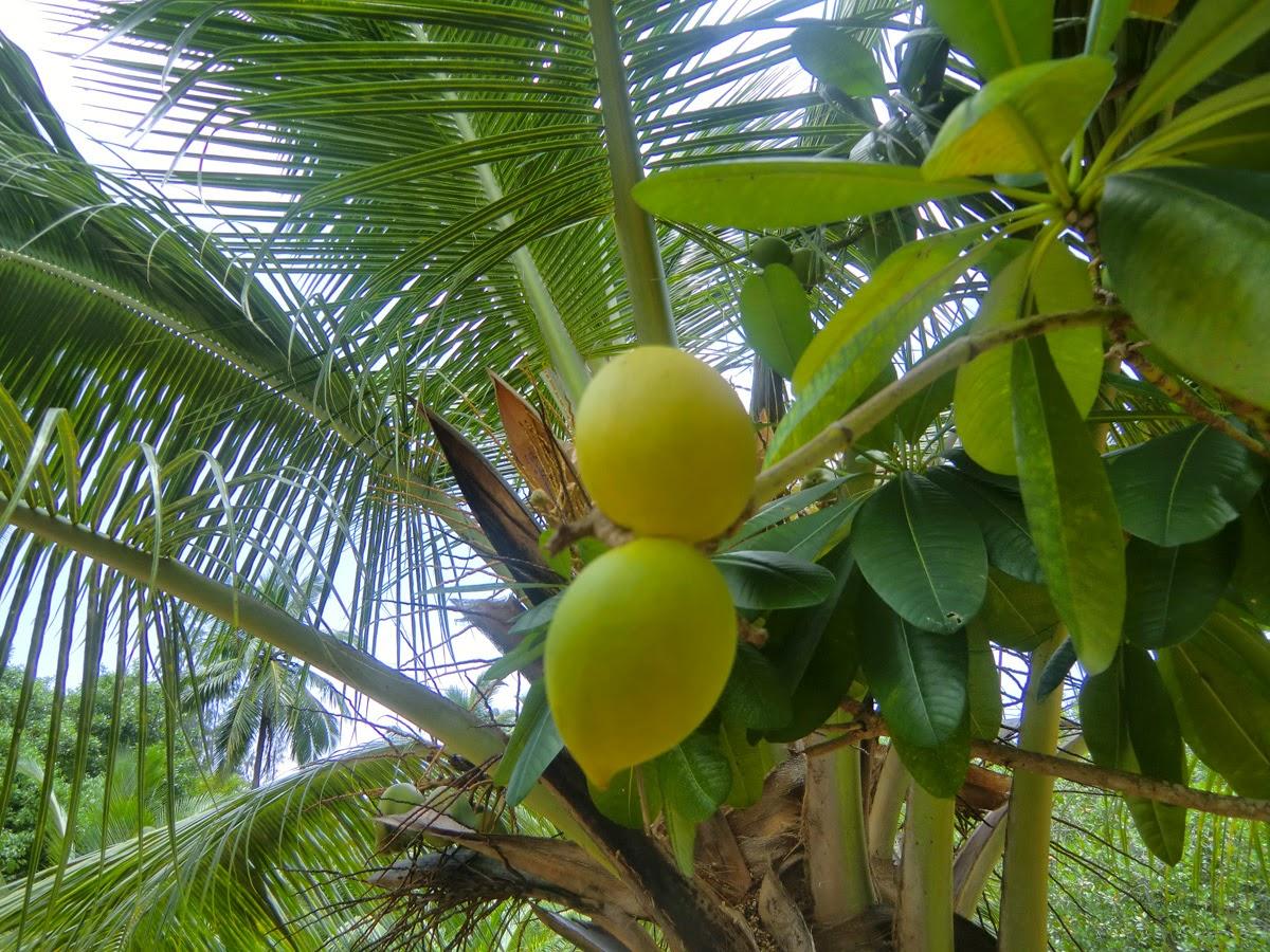 Сейшелы-Лимон