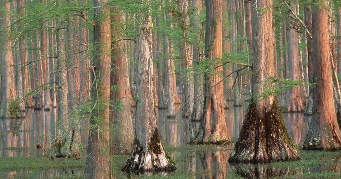 10 negara dengan hutan terluas di dunia terbaik terpopuler - Nature ke wallpaper ...