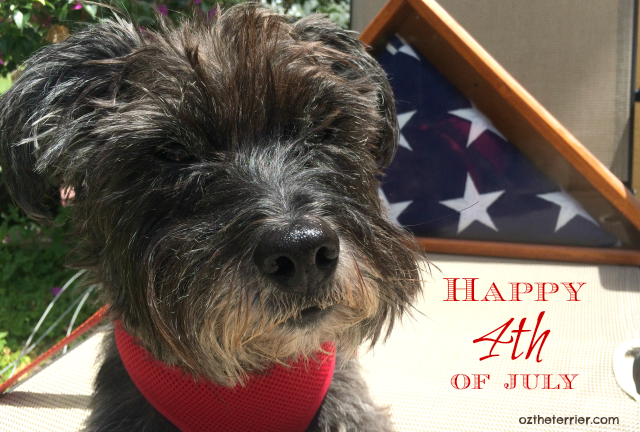 Oz the Terrier Happy 4th of July